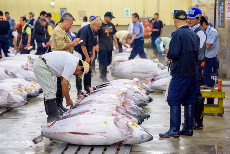 The Tsukiji tuna auction has moved to the new Toyosu Fish Market
