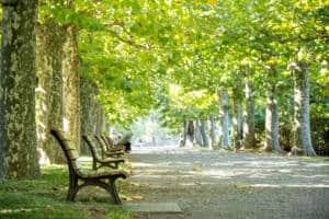 shinjuku gyoen trees