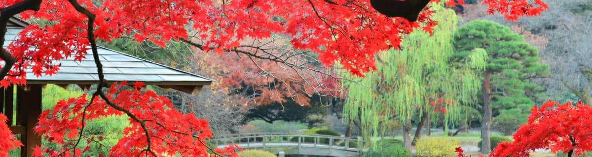 Shinjuku Gyoen: The Garden Lover's Guide