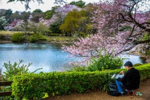 Elderly Artist Painting a Landscape of Cherry Blossom