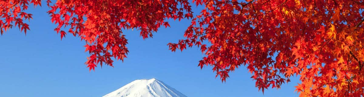 Four Awesome Autumn Bus Tours from Tokyo