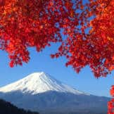 Mount Fuji framed by autumn leaves