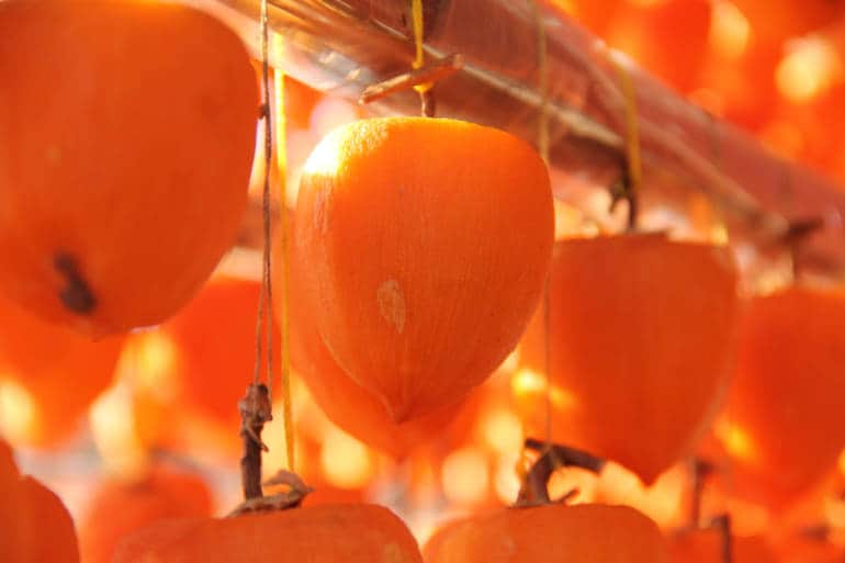 persimmons drying in Japan