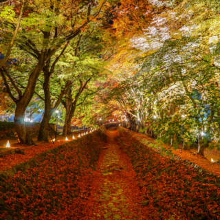 Tokyo Events This Week: Fall, Fairs and Farmers