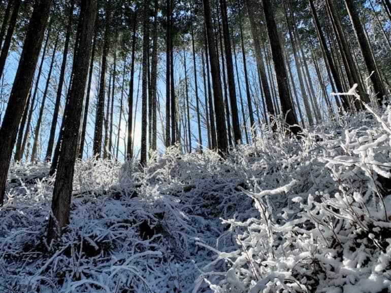 Okutama mountain forest in snow