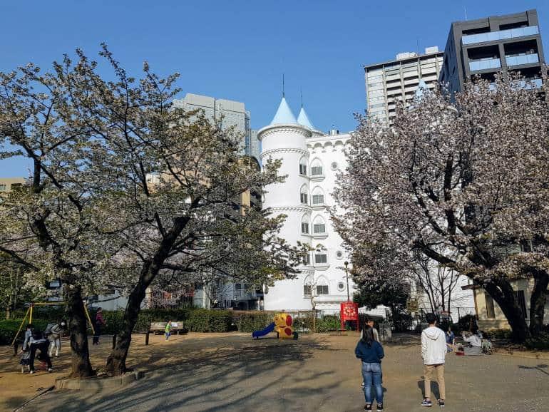 Hikawa Park cherry blossoms