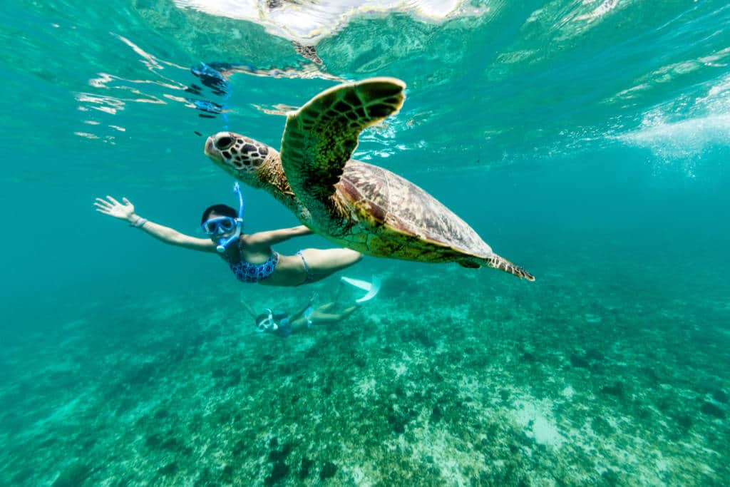 Turtle snorkel dive ocean sea