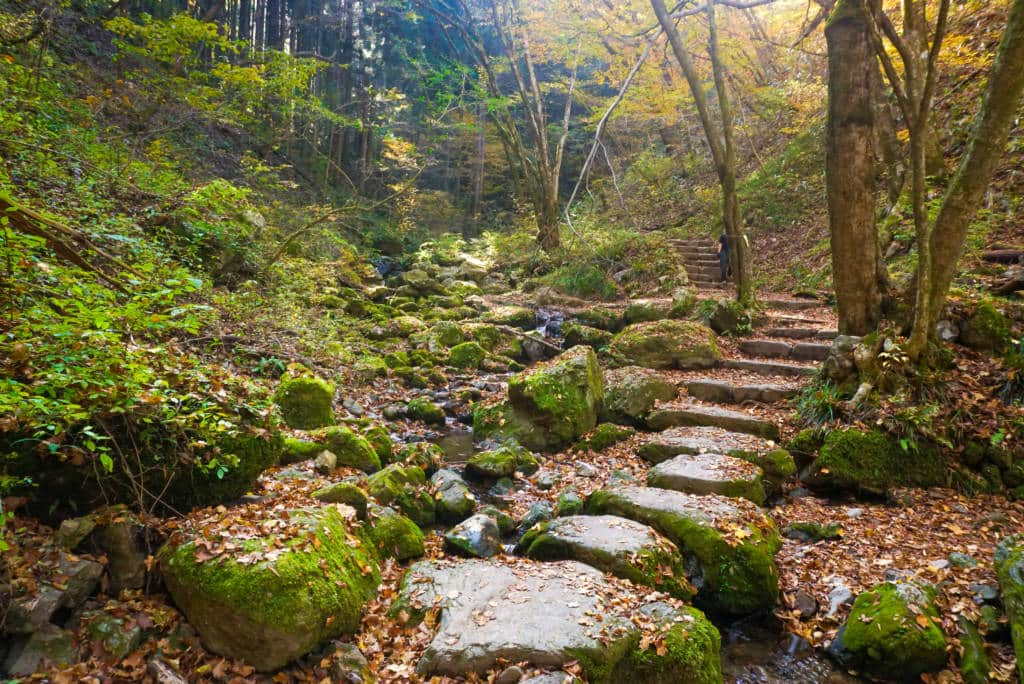 mt. mitake hiking trail