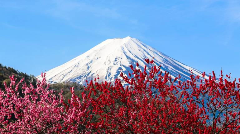 plum blossoms tokyo