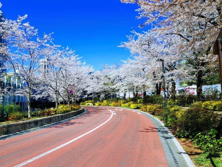 Cheery Trees Roppongi Midtown