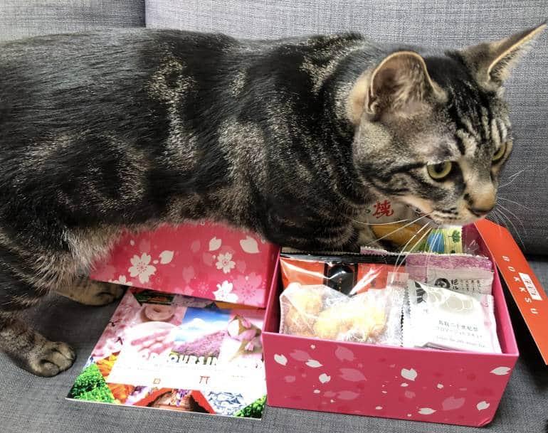 cat in Japanese snack box