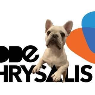 TightOps Webinar: Code Chrysalis - Moving a Code School Online