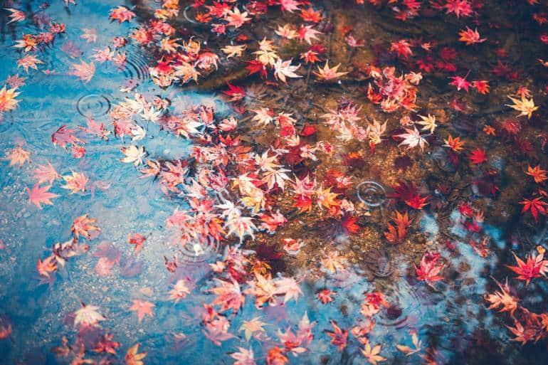 Tokyo Autumn weather