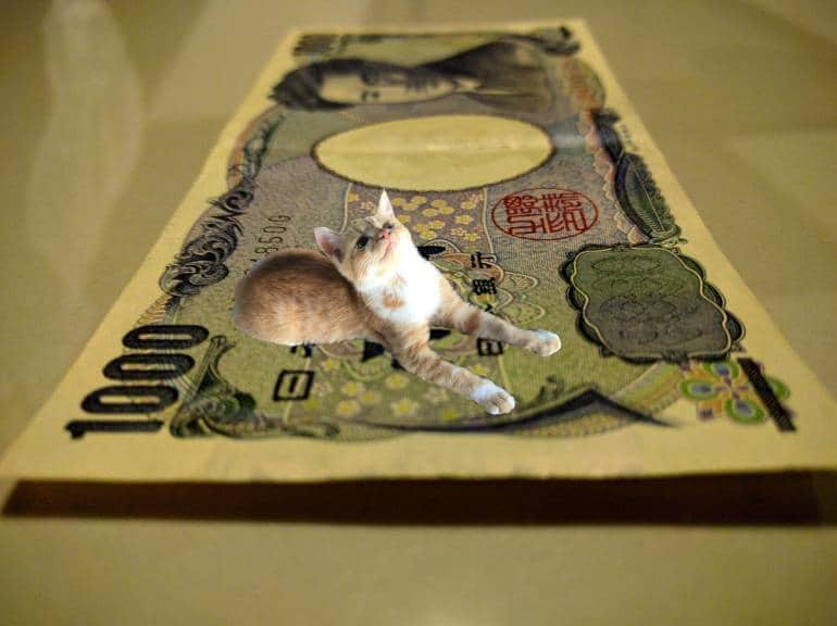 1000 yen note and cat
