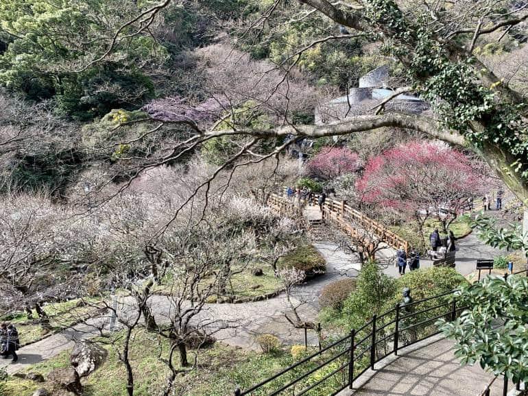 tokyo flowers