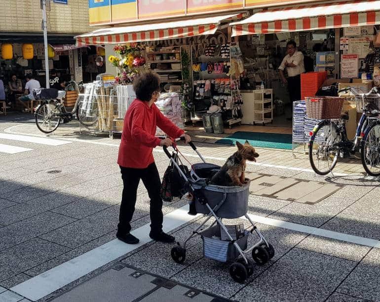 Dog in pram on Togoshi Ginza