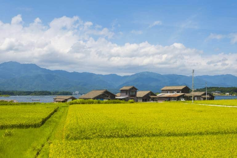Wooden seasonal houses of fishermens that cultivating shellfishes on Lake Kamo on Sado Island in Sea of Japan. It is summer day. In front view green rice field, in background blue sky.