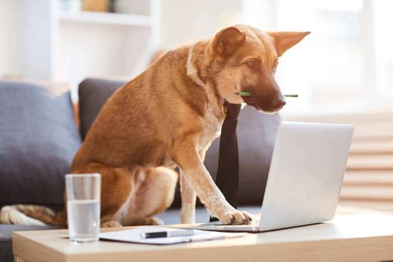 dog working on laptop