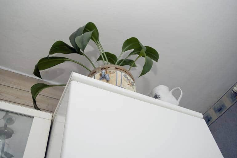 white cupboard with a plant in antique-looking plant pot