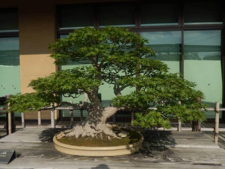 saitama bonsai museum