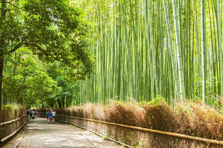 Kyoto's bamboo forest in summer -Tokyo to Kyoto Itinerary