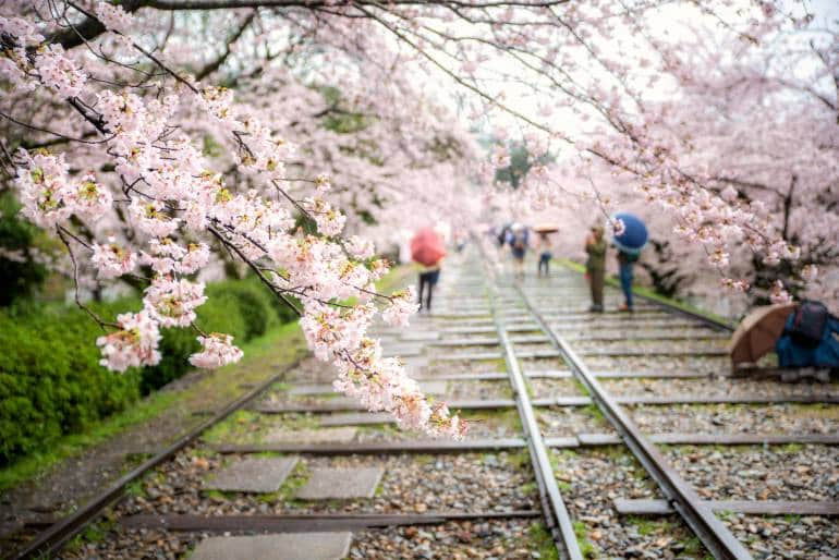Keage Incline with cherry blossom trees in spring