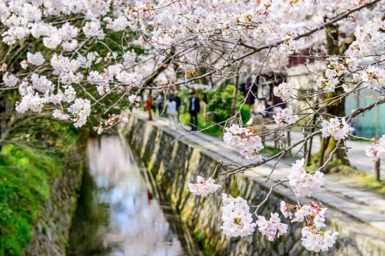Philosopher's Path in the spring with cherry trees in bloom