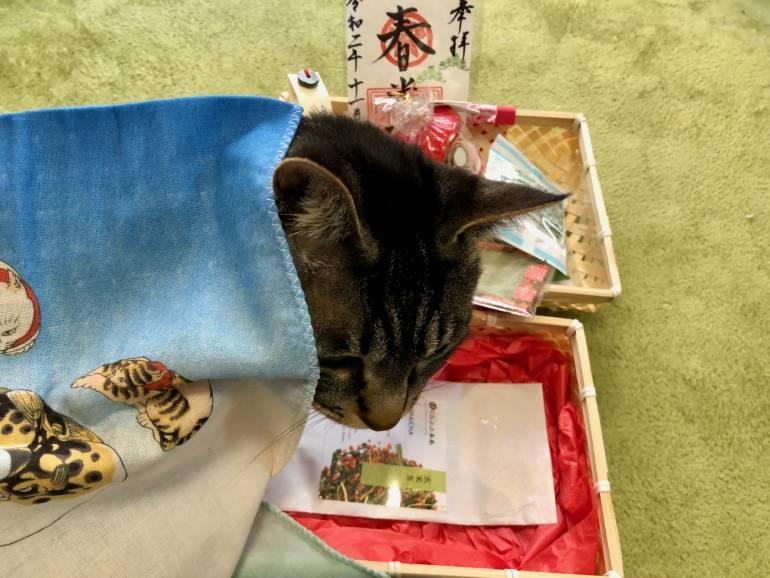 enzo under tenugi cloth