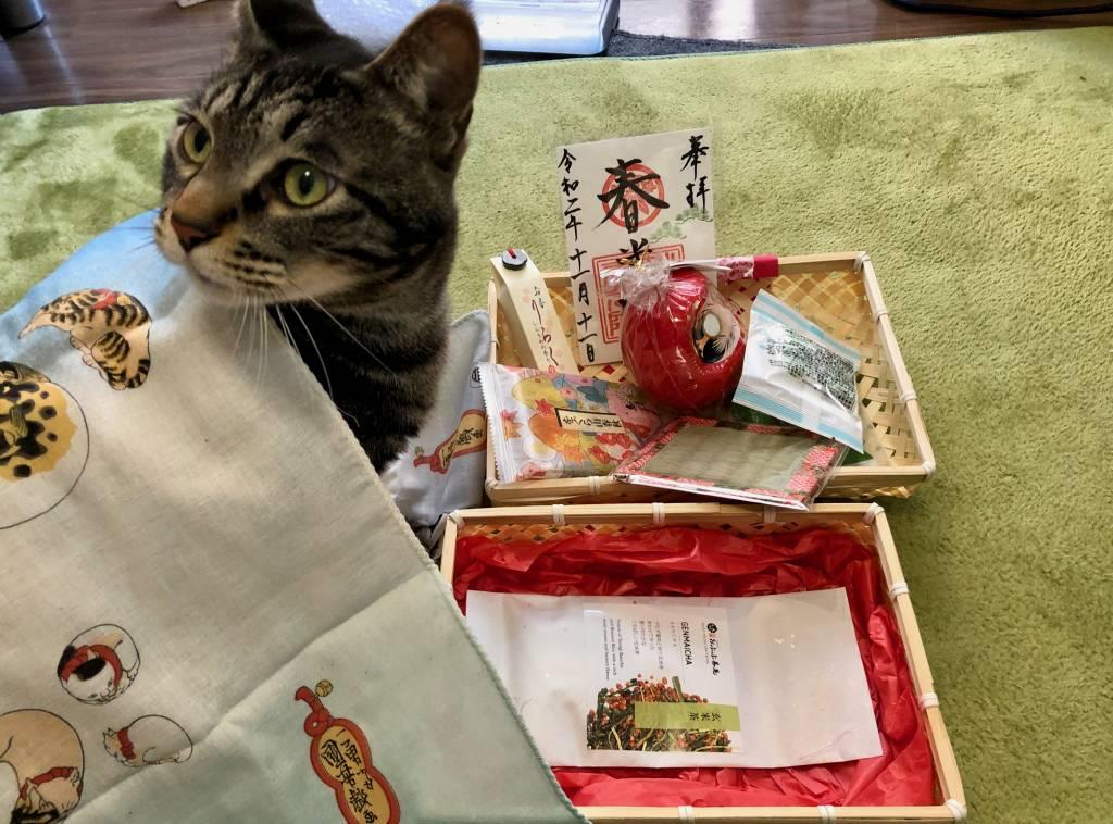 enzo inspects peko peko box closely