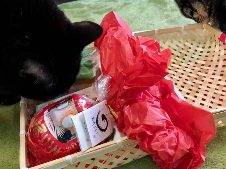 enzo and dot inspect peko peko box