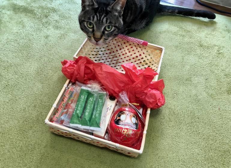 enzo cat and peko peko box