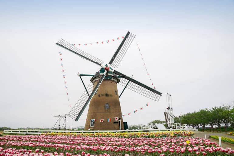 windmill with tulip fields