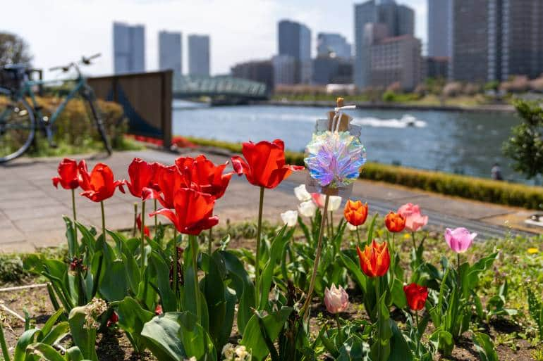 Sumida River in the spring with tulips in foreground and bike in background