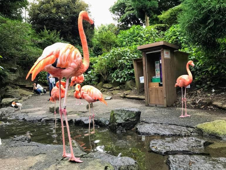 Flamingos at Izu Shaboten Zoo