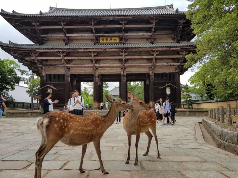 Nandaimon Gate at Todaiji with deer