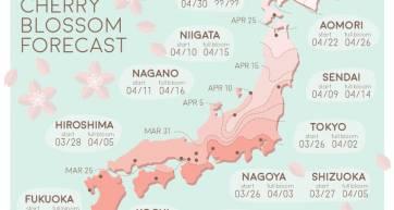 Cherry Blossom Forecast Japan