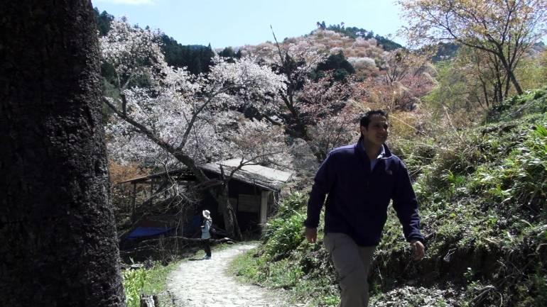 Yoshinoyama Walk