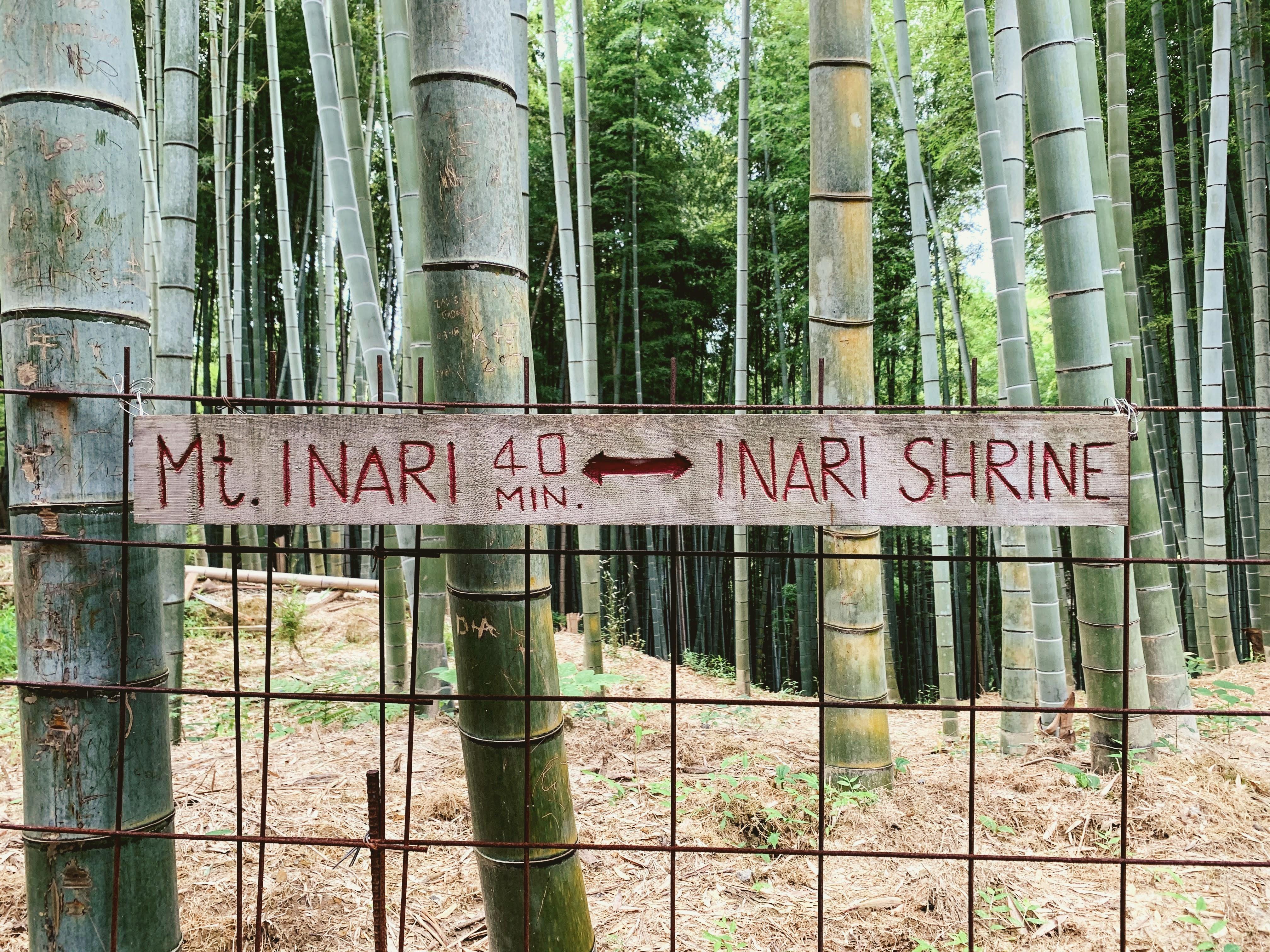 bamboo on the trail to mti nari