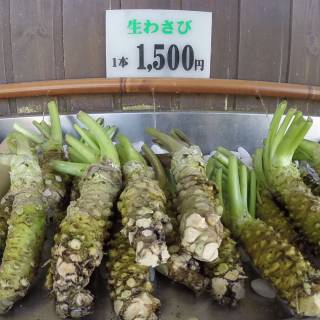 Daio Wasabi Farm: Everything you Ever Wanted to Know About Wasabi