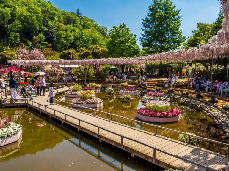 Ashikaga_Flower_Park_9-770x577