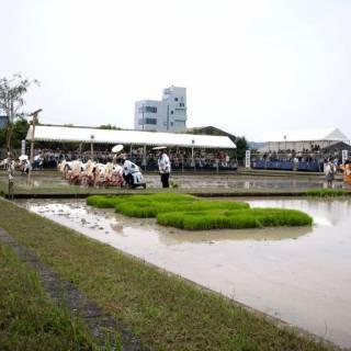 Izawanomiya Otaue Festival