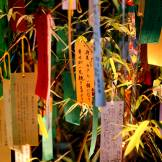 Tanabata wishes hanging in the bamboo