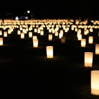 Summertime Light Festivals in Nara