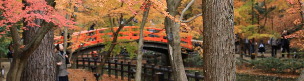 Viewing Autumn Leaves in Kansai: Kyoto and Beyond