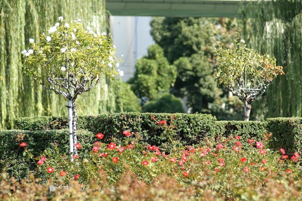 Nakanoshima Park Osaka