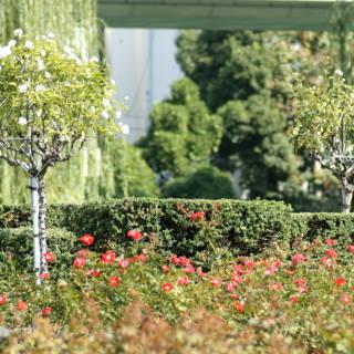 Nakanoshima Park