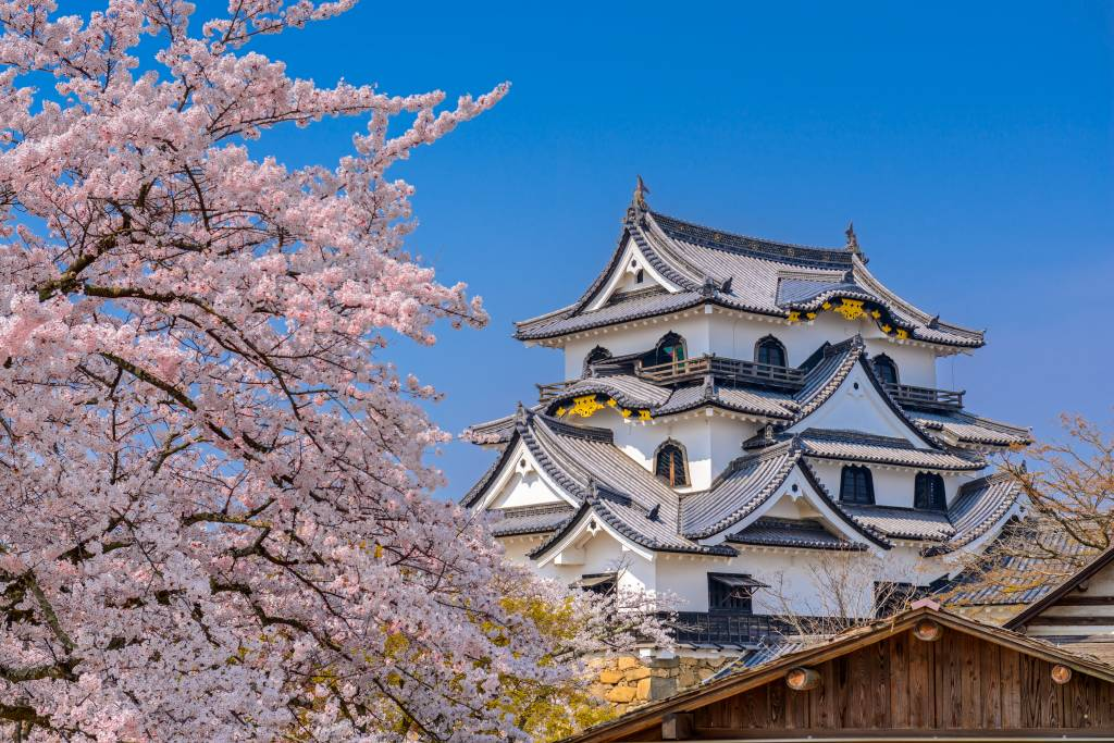 Hikone Castle in spring with cherry blossoms