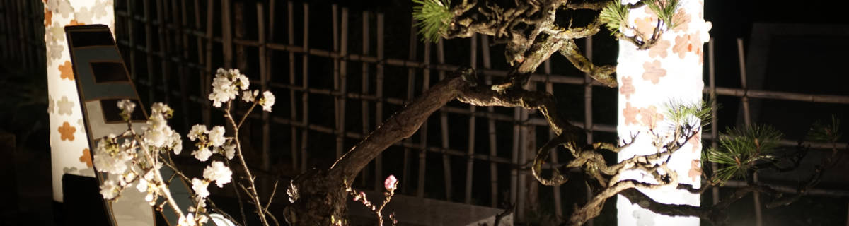 A Magical Kyoto Hanatouro Night: Spotlight on Higashiyama