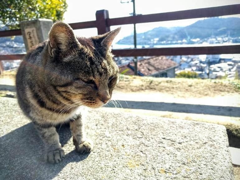 Onomichi Stray Cat