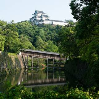 Wakayama Castle: A Sight for the Seasons